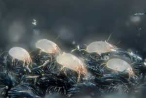 How To Get Rid Of Dust Mites From Your Skin
